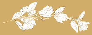 Schmuckelement Magnolie